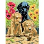 Kreatívny set na maľovanie A4 šteniatka labradora