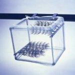 Penn Plax Net Breeder 17x12x113,3 cm pôrodnička s rastlinami