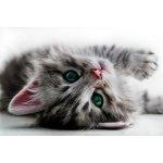 enony mačička