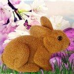 Zajac hnedý - Vyhľadávanie na Heureka.sk 6c838913c86