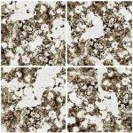 Dimex, keramické obklady - kamenina béžová - 40 x 40 cm