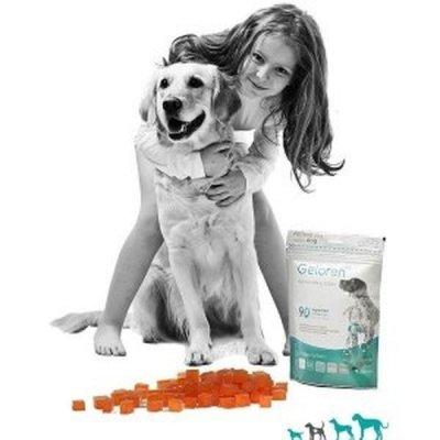 Kĺbová výživa, do ktorej sa váš psík zamiluje