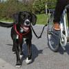 Trixie Vodiaci set na bicykel De Luxe (pre veľké psy)